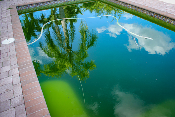 Here some tips of how to remove algae of your pool